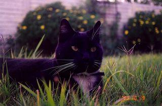 Majestic kats