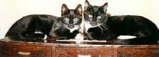 Kats and wakame